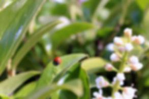 ladybug; photography