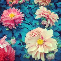 Instagram - #flower#trial#2013
