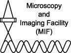MIF logo.jpg