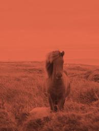 Ville hester