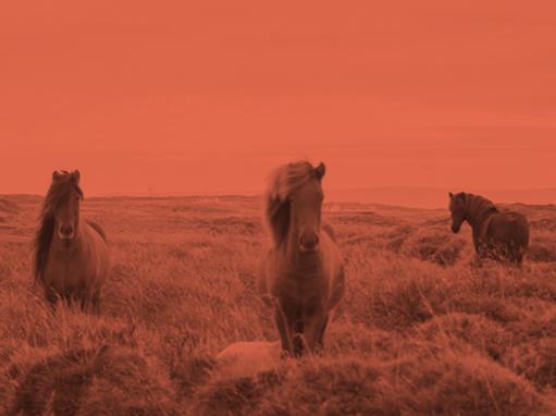 paardentherapie paarden-therapie.nl