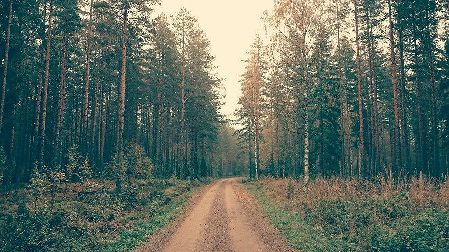 עצים אורן