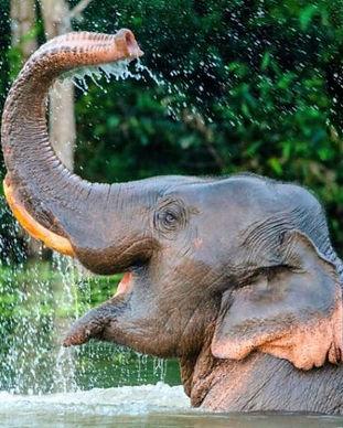 Elephant-trunk-960x640-900x480.jpeg