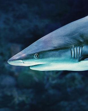 2011-17_Social_Shark-900x480.jpg