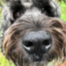 Close up nose dog.jpg
