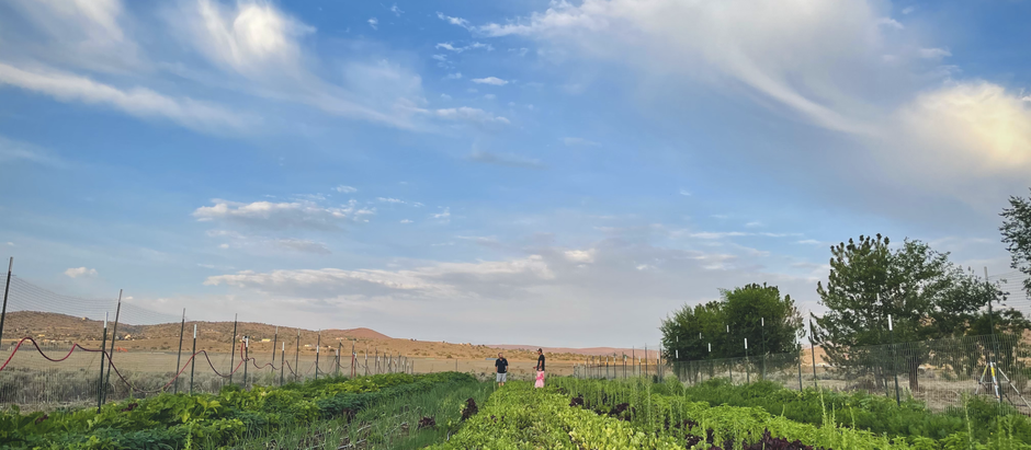 Cultivating a Food System  {Week 12 CSA}