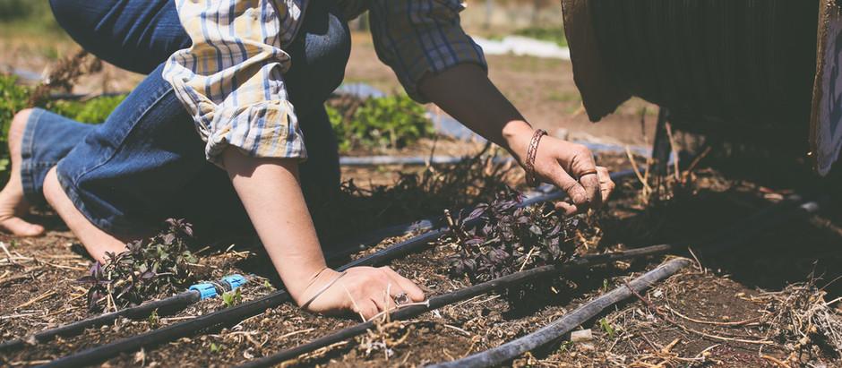 Deep Roots make Bending Easy {Week 5 CSA}