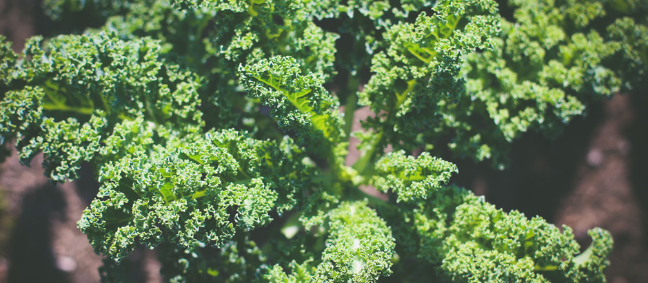 Every Kale Counts  {Week 18 CSA}
