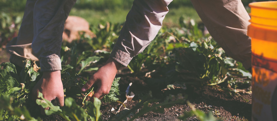 Hands in the Dirt, Hearts in the Sky  {Week 3 CSA}