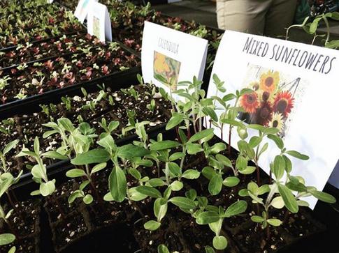 slangin seedlings