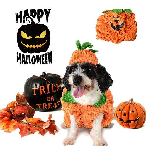 Dog Halloween 🎃 Pumpkin Costume