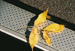 Yellow-leaf-300x202.jpg