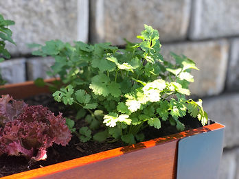 Hedge Herb & Vegetable Planter