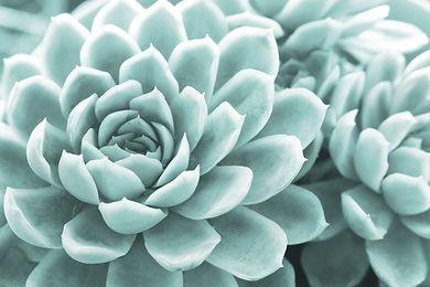 succulent-4453152_1920.jpg