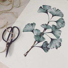 Ginko Illustration