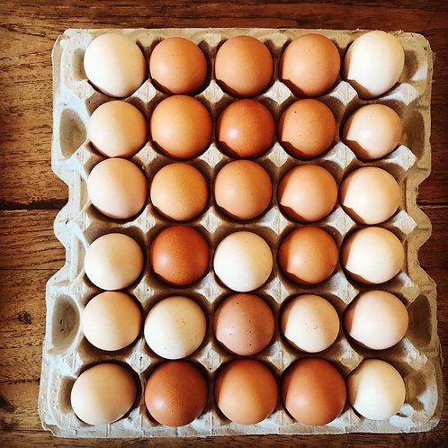 Eggs (CASE - 15 doz)