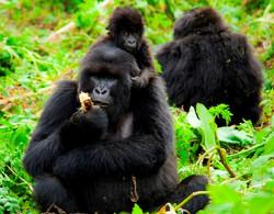 Volcanoes-National-Park-Rwanda