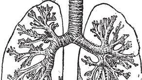 Similarités physiologiques entre les plantes, les animaux et les humains