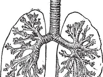Respiratory Health: A Breath of Education
