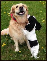 dog friends having a play date on a walk