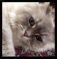 happy cat sitter maple grove mn
