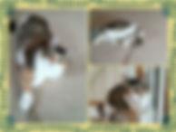 Pet Sitting Cat Sitter Dog Walking Rogers St. Michael Monticello Otsego Albertville Maple Grove