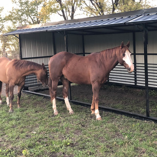 10 x 30 Horse Shelter