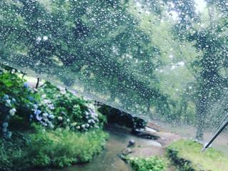 雨は好きですか??