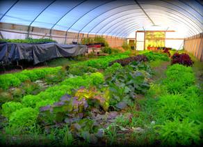 Visiting Avalon Gardens Eco-Village Near Tuscon