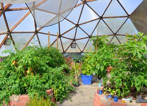Boys and Girl's Club Builds Solar-Powered Green House