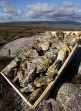 Oysters from Irish Premium Oysters
