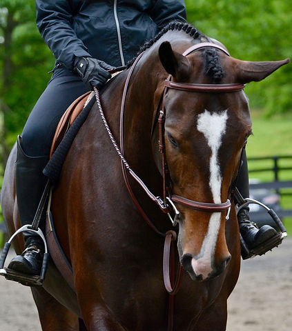 Bay hunter horse with beautiful bridle tack at Upperville Colt and Horse show