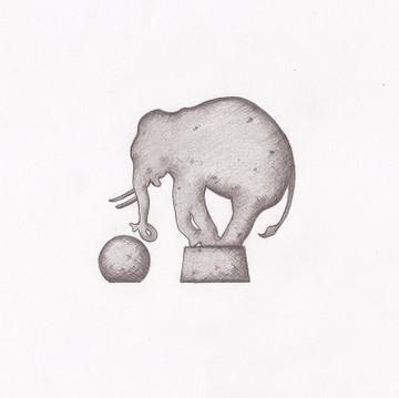 Elephant-de-cirque