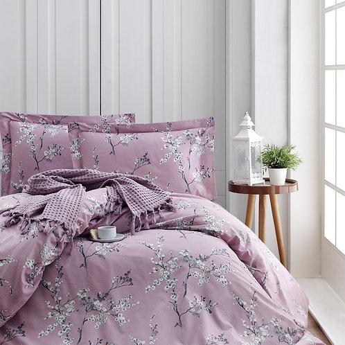Chicory - Pink