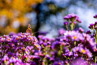 Butterfly in the Garden.jpg
