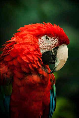 Parrot Portrait.jpg