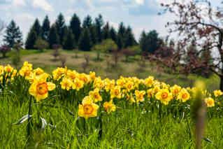 Flowers on the Hills.jpg