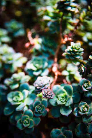 Smallest Succulent.jpg