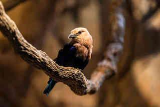 Perfect Pose (Bird)