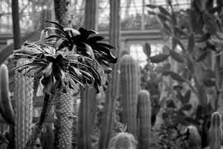 Desert in Black & White.j