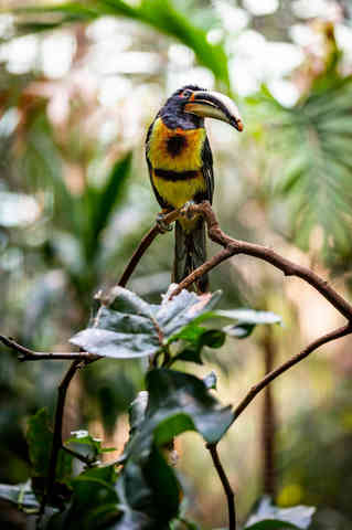 Standing Out (Tucan).jpg