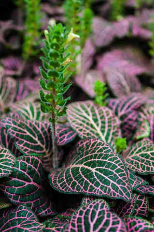 Veins in a Leaf.jpg