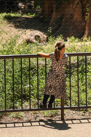 Looking at the Animals.