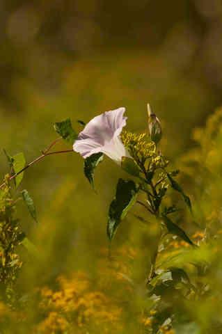 Flower in the Sunlight.jpg