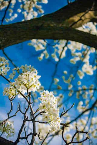 Looking Through the Flowers.jpg