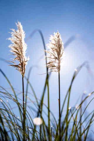 Grasses in the Sun.jpg