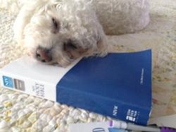 Puppy faith