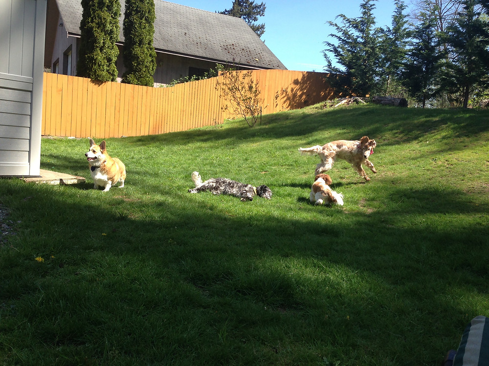 Pups running and playing together
