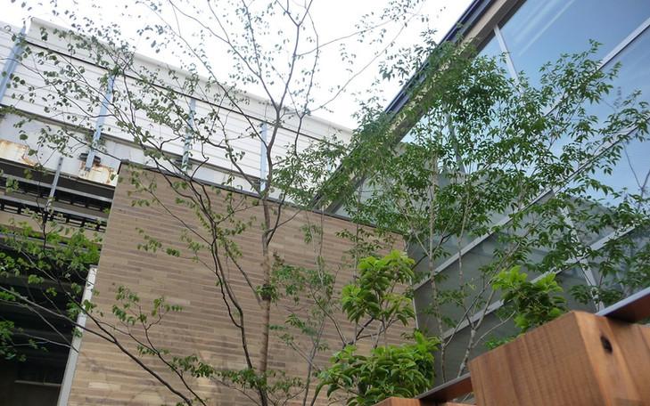 日本橋の庭