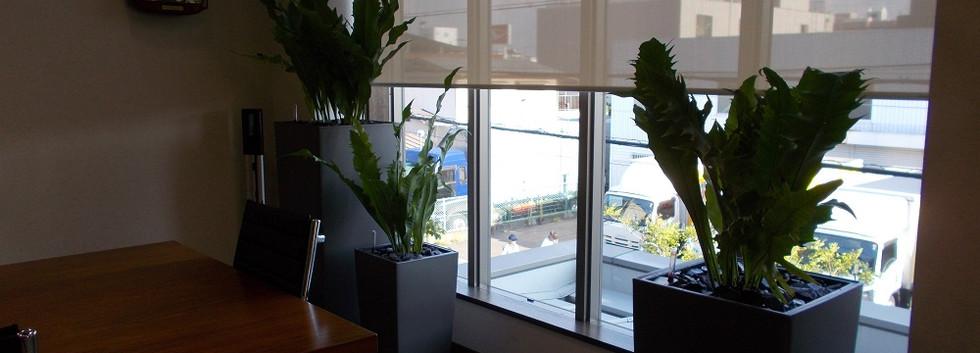 長友産業株式会社 室内観葉植物